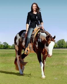 Never Compromise, World Champion APHA Stallion.  Absolutely gorgeous!!