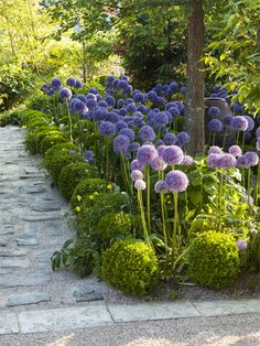modern garden border Printemps Allium Globemaster Buxus sempervirens Suffruticosa Les Jardins Agapanthe 76 France The post modern garden border appeared first on Garten. Unique Garden, Diy Garden, Balcony Garden, Dream Garden, Garden Paths, Garden Hedges, Spring Garden, Garden Table, Garden Boxes