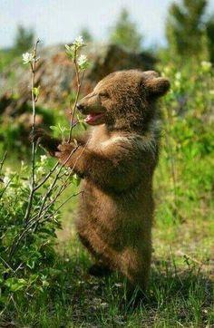 bear cub....sweet