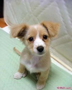 happy life, lovable dog expression - cute animals (4) - Cute animals ...  www.10360.com