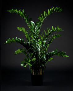 Pianta artificiale Zamilifolia