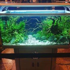 #acuario #acuarios #aquascape #aquascaping #acuariofilia #surmascotas #surmascota2016 https://t.co/nQAsAJpIRQ