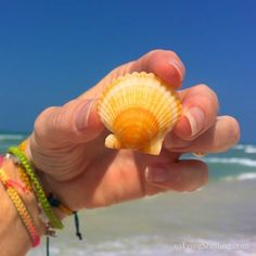 Someone must have put in a good word to Mother Nature for me. I put in an order to her for lots of sea shells for my family's Sanibel visit this week.