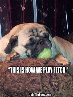 That's NOT how you play fetch, Dallas. You're supposed to give me that ball back... Or no treat for you!!