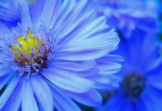 100 Fantastic Blue Vision Photographs
