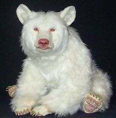 A-Z List of 125 Rare Albino Animals [Pics] - - Albinism is an genetic disorder characterized by a lack of melanin in the body, the body's color producing pigment. It is extremely rare. Here's a list of 125 rare albino animals. Amazing Animals, Unusual Animals, Animals Beautiful, Strange Animals, Animals And Pets, Funny Animals, Rare Albino Animals, West Highland Terrier, Tier Fotos