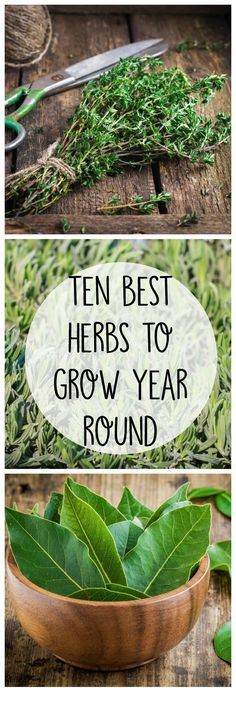 10 Best Herbs to Grow All Year Round - Crafty Little Gnome