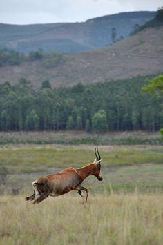 Mlilwane Wildlife Sanctuary, Swaziland