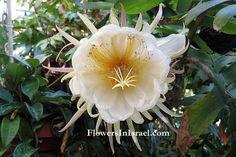 Bilder på blommor, Bilder av exotiska blommor