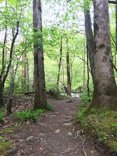 Everywhere you wander, you will find peace and quiet in the #SmokyMountains. #VisitSevierville