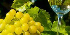 Giampietro Comolli, il più grande esperto italiano di vini spumanti, inviato speciale in Terra di Prosecco
