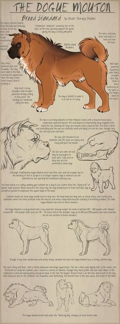 The Dogue Mouton pg2 - Breed Standard by ShockTherapyStables on DeviantArt