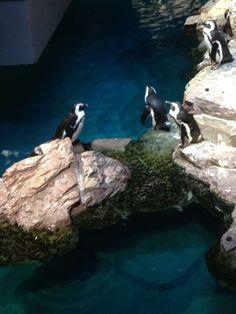 New england aquarium discount admission tickets boston New england aquarium tickets