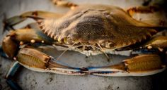Lowcountry Food: In praise of the soft shell crab