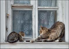 Love cats in windows