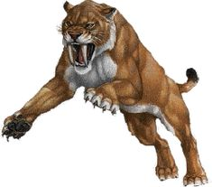 Mammoths and saber tooth tigers A pride of Smilodon fatalis, often called a saber-toothed cat, attacks a calf belonging to a herd of mammoths, while the mother moves to protect their offspring. Description from pinterest.com. I searched for this on bing.com/images