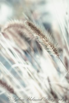 Macro Photography Nature Photography Spring Grass Surreal pastel Abstract grey beige wall art 4x6 Fine Art Photography Print. $8.00, via Etsy.