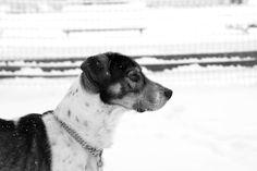 Il cane di neve
