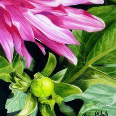 This Botanical Floral-Flowers Macro Portraits Nature , Rock Paper, Coloured Pencils painting was produced by Alison Philpott. Pencil Painting, Coloured Pencils, Floral Flowers, Like You, Things I Want, Daddy, Portrait, Nature, Plants