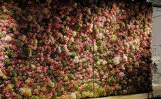 flower wall - חיפוש ב-Google