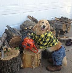 Geçen kış odun keserken ben