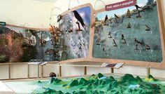 Museo Archeologico Naturalistico di Galzignano Terme (PD) - Allestimento Permanente #museumdesign
