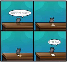 El gato y el whisky. #humor #risa #graciosas #chistosas #divertidas