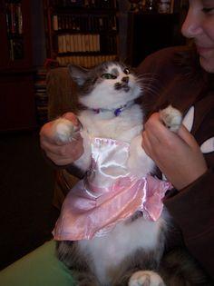 """Será que você está vivendo sua própria versão felina de """"Mulher Solteira Procura""""?"""