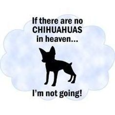 If there are no Chihuahuas...
