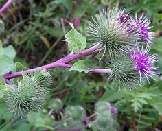 dictionary of healing herbs with photos and ways to use them