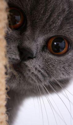 kitten close-up