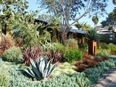 Debora Carl Landscape - Northern Ca Drought Tolerant Plant New Zealand Flax Plant Water Wise Landscape Low Water Garden Mexican Beach Pebble Sidewalk Edging Garden Focal Point Phormium River Stone Succulents And Grasses Red New Zealand Flax Layered Garden Mexican Pebble Rusted Metal Sculpture Stucco Mailbox Senecio Mandraliscae Spiky Plants Easy Care Garden Waterwise Succulent Hillside Planting Contemporary Landscape
