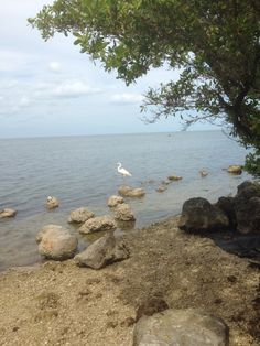 Biscayne National Park: A Park Forgotten Florida Sunshine, Sunshine State, Biscayne National Park, American National Parks, Mangrove Forest, Gulf Of Mexico, Places To See, Acre, Traveling