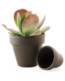 Update your terracotta pots with chestnut brown acrylic paint. Darker vessels are a hot garden trend now.