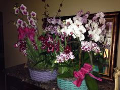 Huge combo orchid baskets for spring