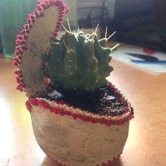 Cactus Baseball Sant Boi Cactus, Play, Baseball, Desserts, Food, Tailgate Desserts, Deserts, Essen, Postres