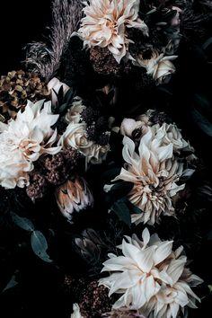 Runa + Holly art Home Beautiful Magazine Australia Dark Flowers, Pretty Flowers, Aesthetic Backgrounds, Aesthetic Wallpapers, Flower Wallpaper, Wallpaper Backgrounds, Animal Wallpaper, Colorful Wallpaper, Black Wallpaper
