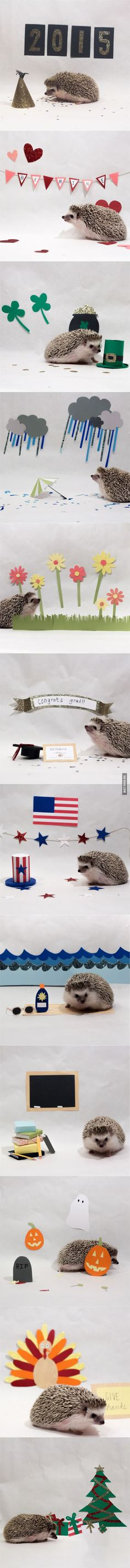 I took care of my roommate's hedgehog over Christmas break and decided to make a 2015 calendar for her.