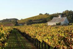 Wine Country Farm