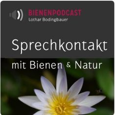 Podcast Bienengespräche Wild Bees, Bee Swarm, Favorite Son, Oregon State University, Fantastic Show, Animal Society, Bee Keeping, Top Free