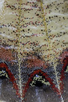 Butterfly Wing close-up Butterfly Project, Butterfly Print, Butterfly Wings, Moth Wings, Insect Wings, Patterns In Nature, Textures Patterns, Crystal Texture, Gossamer Wings