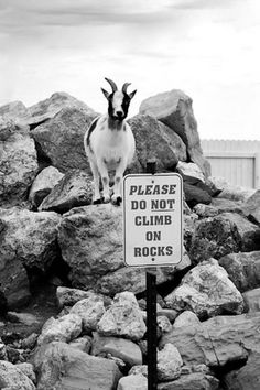 .Please do not climb on these rocks....lets go to Jesse's house climb on her rocks...