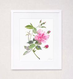 Botanical Floral Study No. 4 (Watercolor Art Print)