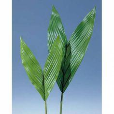 Kokospalmen - artplants.de