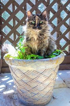 Crazy Cat Lady, Crazy Cats, Big Cats, Cats And Kittens, Cute Cats, Animals And Pets, Cute Animals, Cat People, Domestic Cat