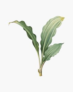 Architecture Collage, Architecture Graphics, Plant Illustration, Botanical Illustration, Illustration Botanique Vintage, Herbs Image, Create Wedding Invitations, Tree Photoshop, Plant Images