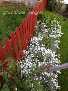 Snow in summer at Adare Snow In Summer, Coast, Bloom, Plants, Design, Plant, Planets