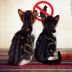"""""""WTF?!?"""" No cats allowed......."""