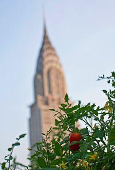 8 New York City restaurants that grow their own food