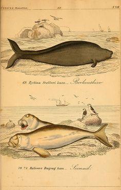 die vollständigste naturgeschichte des in- und auslandes. 1845-1846.